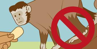 Ilustração do Guia Biodiversidade Faz Bem à Saúde